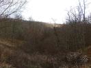 Зимний лес, но еще без снега